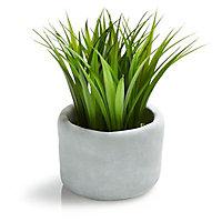 White Grass Decorative plant