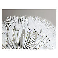 Dandelion White Canvas art (H)570mm (W)770mm