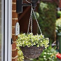 Smart Garden Multicolour Petunia artificial Hanging basket, 25cm