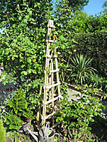 Blooma 3 sided Obelisk support trellis, 1.89m