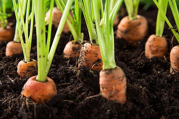 Outdoor Garden Ideas Advice Diy At B Q