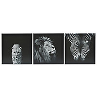 Animals Black & white Canvas art, Set of 3 (H)300mm (W)900mm