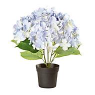 Blue Hydrangea Decorative plant