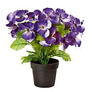 Blue Pansy Decorative plant