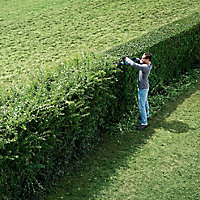Bosch AHS 18V 55cm Cordless Hedge trimmer