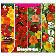 Collection Nasturtium Seed