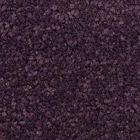 Colours Plum Carpet tile, (L)500mm