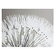 Dandelion White Canvas art (H)570mm (W)770mm