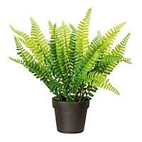 Fern Decorative plant