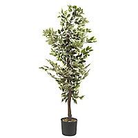 Ficus tree Decorative plant