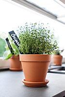 Laleh Terracotta Terracotta Plant pot (Dia)35.7cm