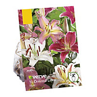 Lilium oriental mixed Flower bulb