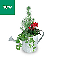 Festive watering can planter in Tin