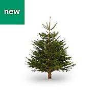 4ft Nordmann fir Cut christmas tree