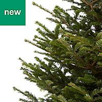 7ft Nordmann fir Cut christmas tree