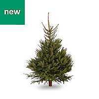 5ft Blue spruce Cut christmas tree