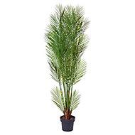 Parlour palm Decorative plant