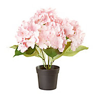 Pink Hydrangea Decorative plant