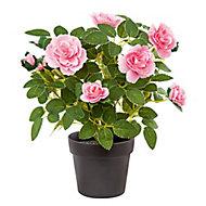 Pink Rose Decorative plant
