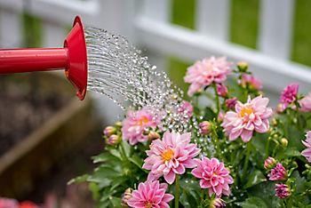 watering bulbs