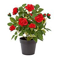 Red Rose Decorative plant