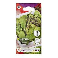 Salad winter baby leaf mix Seed
