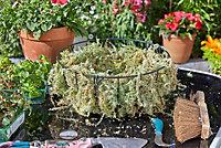 Smart Garden Moss