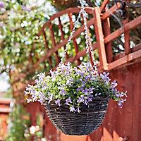 Smart Garden Pansy artificial Plastic Hanging basket, 25cm