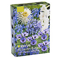 Summer blues collection Flower bulb