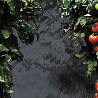Verve Black Polypropylene Weed control fabric, (L)30m (W)1m