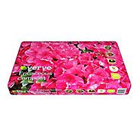Verve Ericaceous Beds,borders & pots Compost 20L