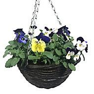 Viola Planted hanging basket 250