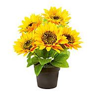 Yellow Sunflower Decorative plant