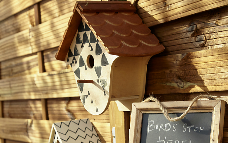 How to care for birds in the garden