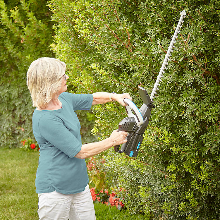 Hedging and climbing plants