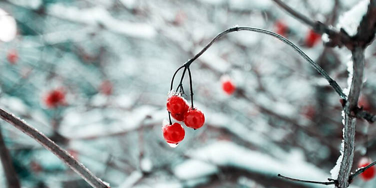 How to get your garden winter ready
