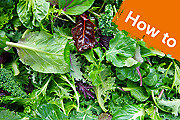How to grow and harvest salad leaves