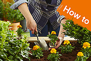 How to plant bedding plants in beds & borders