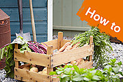 How to grow and harvest carrots