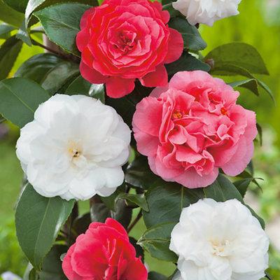 Plants, Trees, Seeds & Bulbs | Gardening